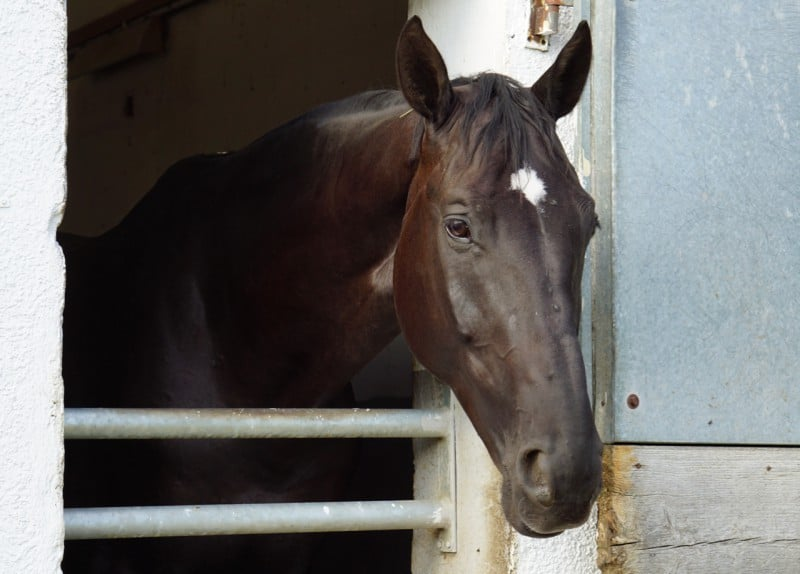Pferd in Stall sagt Goodbye